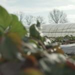 A EU Program za oporavak od poplava podržao je obnovu poljoprivrede