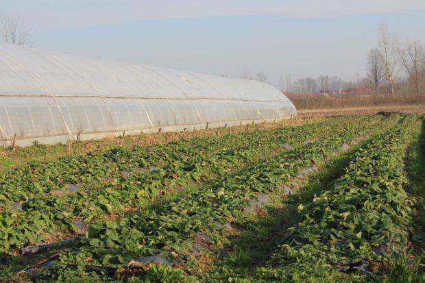 H  Sredstvima od EU zemljoradnicima su kupljeni plastenici, sjeme, sadnice, đubrivo i zaštita za sadnice